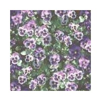 Print Blocks Paper Pansies