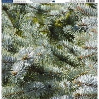 Print Blocks Paper Pine Tree Spruce
