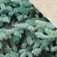 "Kaisercraft Mint Wishes 12x12"" Double Sided Scrapbook Paper Fresh Pine"