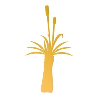 Ultimate Crafts Australiana Die Grass Tree Tall